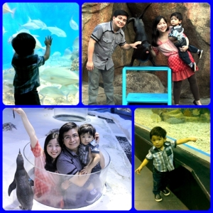 Timmy enjoying Manila Ocean Park :)